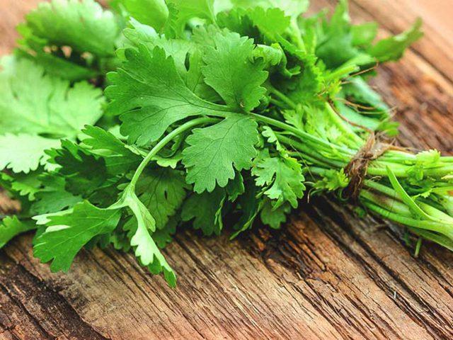 Mùi tây - loại rau gia vị quen thuộc có nhiều tác dụng chữa sỏi bàng quang