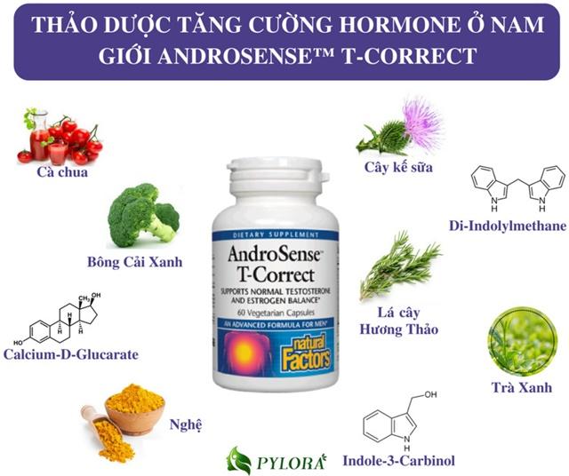 Các thành phần trong thuốc thảo mộc nam AndroSense T-Correct